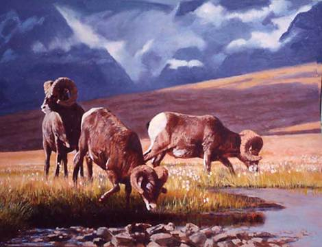 Bighorn Sheep in the Foothills by Tom Beecham