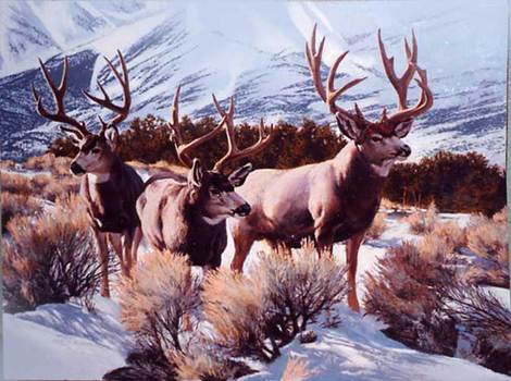 Mid-winter Mule Deer by Tom Beecham