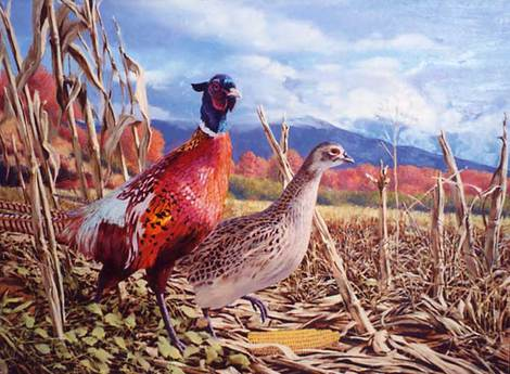 Autumn Harvest for Ringneck Pheasant by Tom Beecham