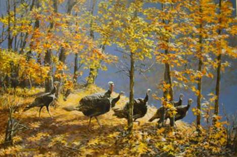 Turkeys by Tom Beecham