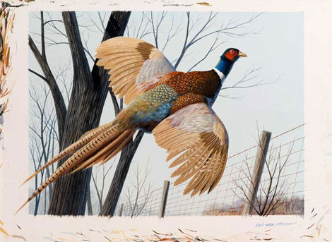 Pheasant by Keith Freeman