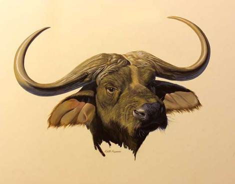 Cape Buffalo by Keith Freeman