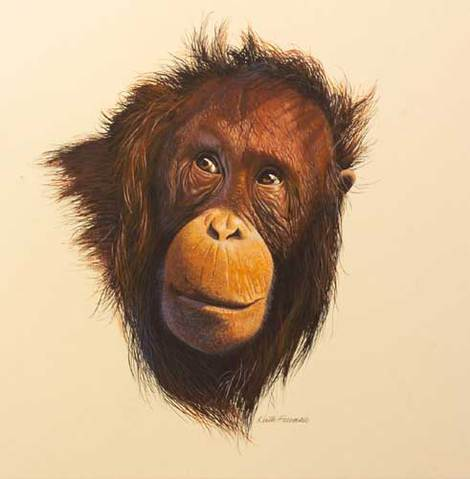 Orang-utan by Keith Freeman