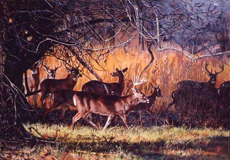 Whitetail Deer - Backwoods to Backyard by Tom Beecham